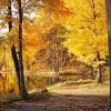 5 modi per fotografare le foglie d'autunno