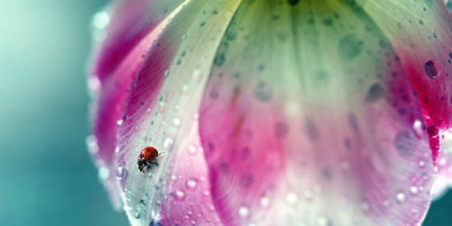 Fotogallery: fotografare sotto la pioggia
